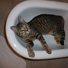 Day 0: the farm cat in my bidet