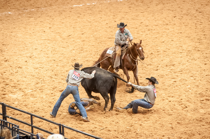 Shaie Williams for Working Ranch Magazine. Stewart Ranch, Tres Cambell attempts to milk while Ryan Wakefield gets trampled and Pete Stewart anchors on the tail. Ray Bradley horseback has a rope around her neck during the Wild Cow Milking at the WRCA 21st World Championship Ranch Rodeo  held at Amarillo Civic Center  in Amarillo, TX  on November 12, 2016.