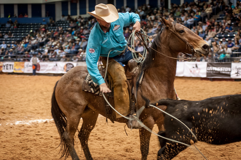 Shaie Williams for Working Ranch Magazine. Travis Duncan from Lonesome Pine Ranch and last year world champions heals a heifer during the Stray Gathering at the WRCA 21st World Championship Ranch Rodeo  held at Amarillo Civic Center  in Amarillo, TX  on November 13, 2016.
