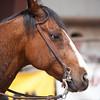 Bronc Riding6_20140524