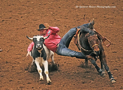 Steer Wrestling in the Rodeo Finals, Waco Texas, January 2012