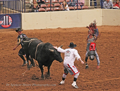 Bull fighters are the best in the Rodeo Finals, Waco, Texas, January 2012