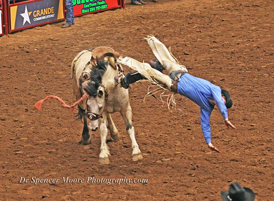 Saddle bronc riding, Waco, Texas January 2012