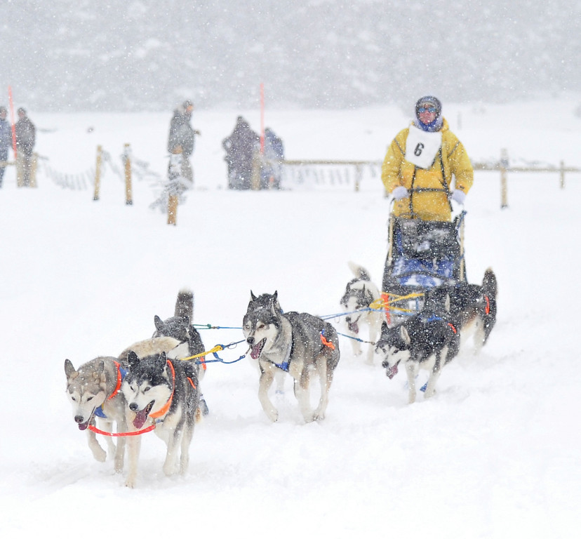 Bud Denega | The Sheridan Press<br /> Wendy Hoenk races during the Bighorn Rush Sled Dog Challenge at Granite Pass Saturday, Dec. 30, 2017.