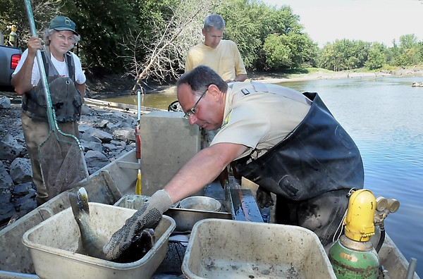 Jeff Malzahn weighs a Minnesota River walleye as Chris Domeier (back) records the data. Doug Pierzina waited with a net to transfer the fish to a nearby truck so it could be included in a live fish exhibit at the Lac qui Parle County Fair.