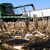 A farmer empties a combine full of corn into a trailer while harvesting a field south of Mankato.