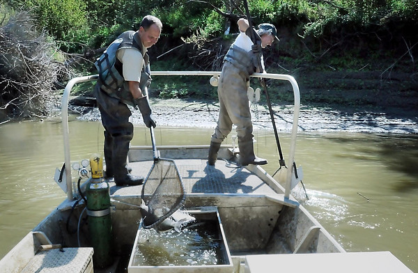 Minnesota Department of Natural Resources workers Jeff Malzahn (left) and Doug Pierzina wield nets to scoop up fish caught in the electrical current field.