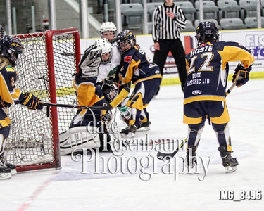 Wolf Pack Action Shots