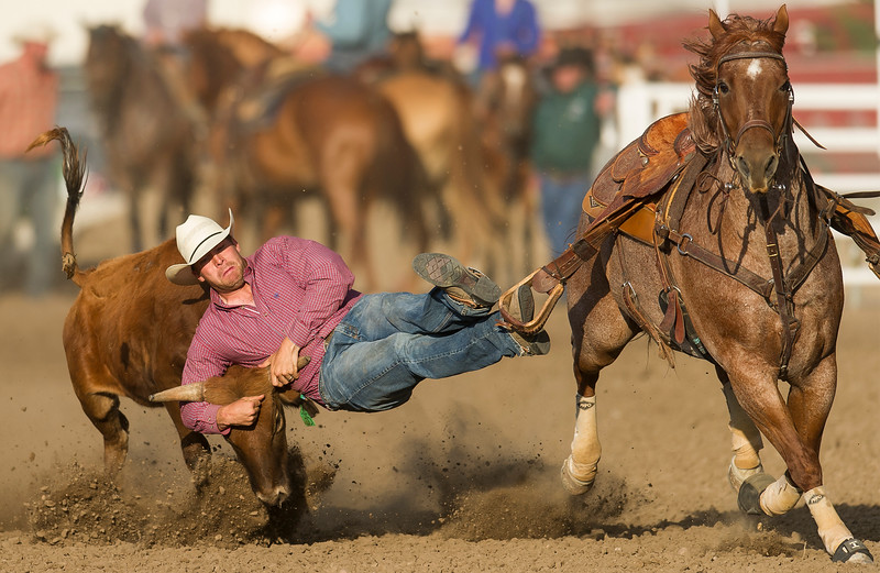 Colby native Blair Jones takes down a steer during the PRCA steer wrestling competition at the Finney County Fairgrounds Thursday.