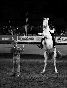 Dan James performs equestrian skills with a standing white horse at the Del Mar National Horse Show in Del Mar, California on Saturday, Apr. 21, 2018.
