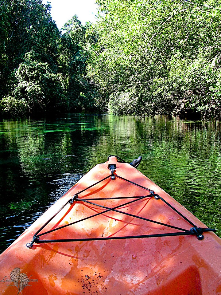 Kayaking On Crystal River, Florida