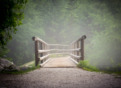 Bridge to the enchanted forest