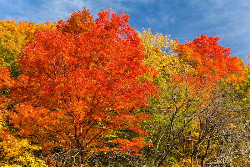 An Autumn Walk Through Wilket Creek Park