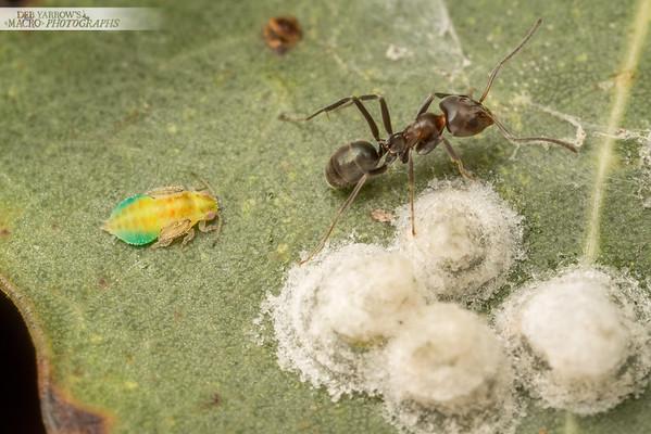 Secret Ant Business - Lerps