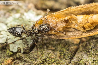 Ant and Moth