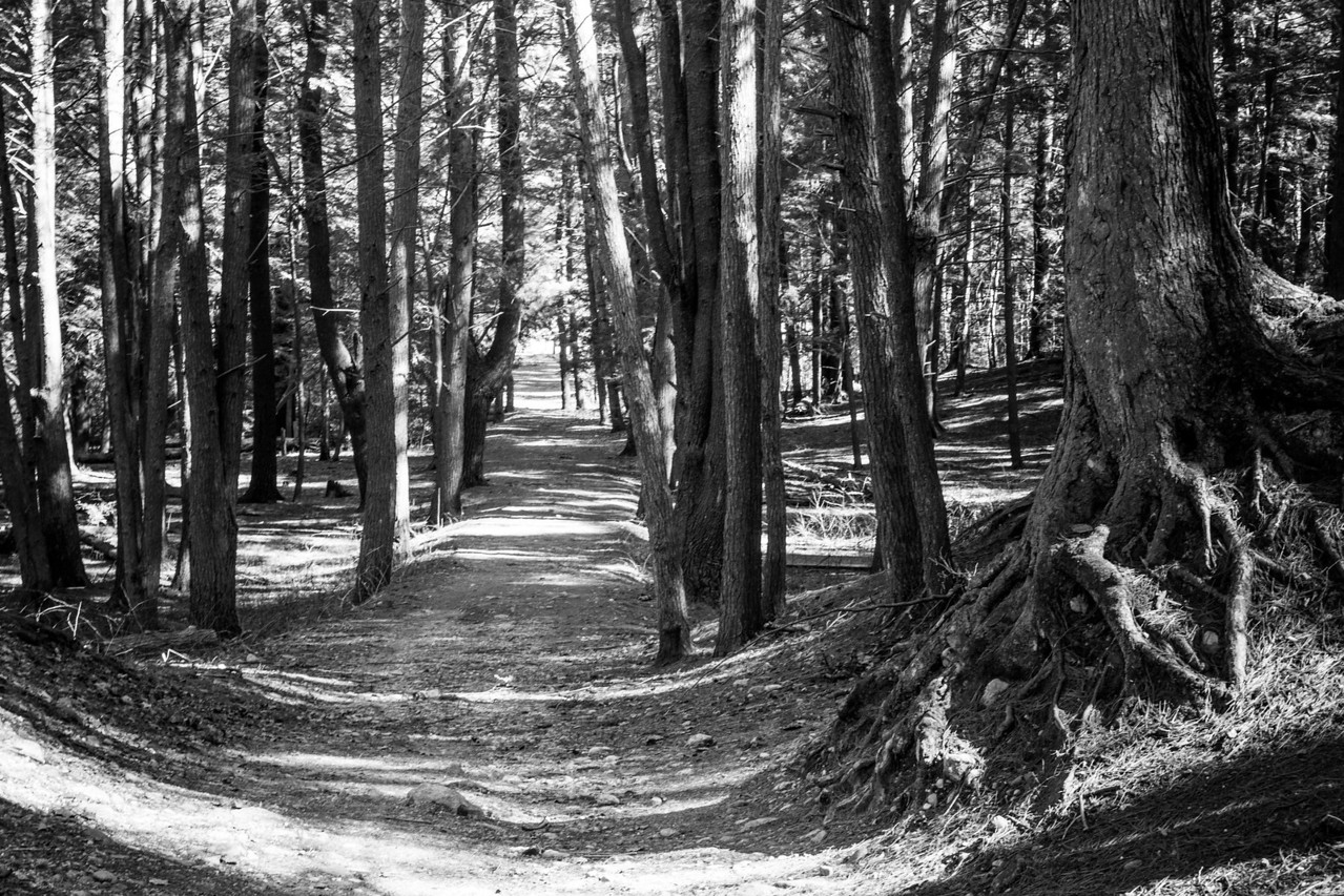 Path in Black Rock State Park, Watertown, CT