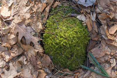 Moss covered rock in Black Rock State Park, Watertown, CT