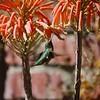 Hummingbird in the backyard!