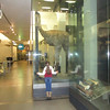 A visit to Auckland museum