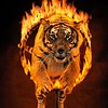 Bengal tiger jumping through burning hoop (Digital Composite)