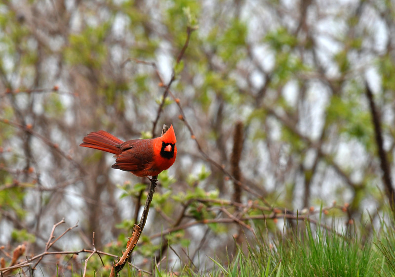 cardinal Rosetta McClain Kingston Rd and Birchmount area
