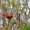 cardinal Rosetta McClain Kingston Rd and Birchmount area