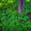 Moist Ferns