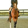 EquestrianIHSA Show2018-42
