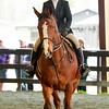 EquestrianIHSA Show2018-12