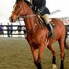 EquestrianIHSA Show2018-6