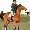 EquestrianIHSA Show2018-58