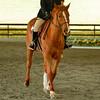 EquestrianIHSA Show2018-614