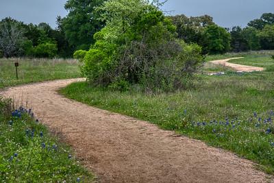 Bluebonnet Lined Trail