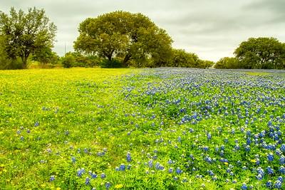 Pedernales River Nature Park, Johnson City, Blanco County, Texas