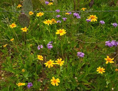Wildflowers Along the Roadside