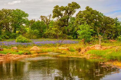 Willow City Loop Pond with Wildflowers