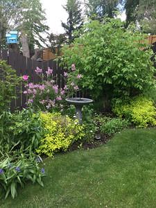 My Blooming Garden #2 June 14 2020 by Judy Baker