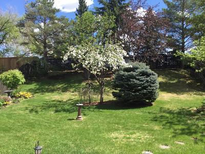 Apple Tree by Judy Baker May 24 2020