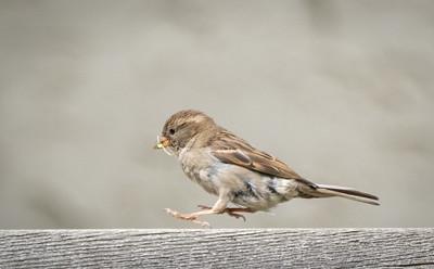 Hop To It Backyard Wildlife by Barry Headrick