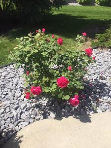 Flowers June 29 #2 by Rick Hernder