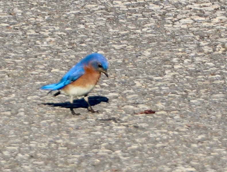 The early blue birds gets the worm?