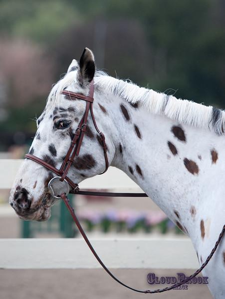 SpringDownhorseshow-019
