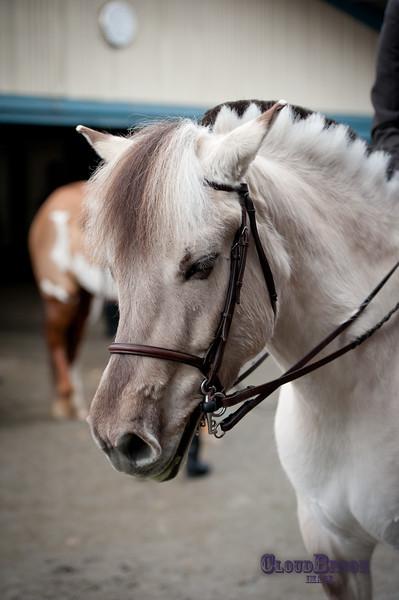 SpringDownhorseshow-037