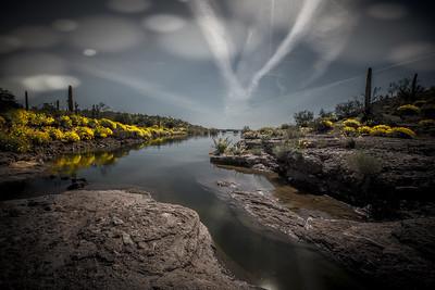 Lake Pleasant Spring Bloom