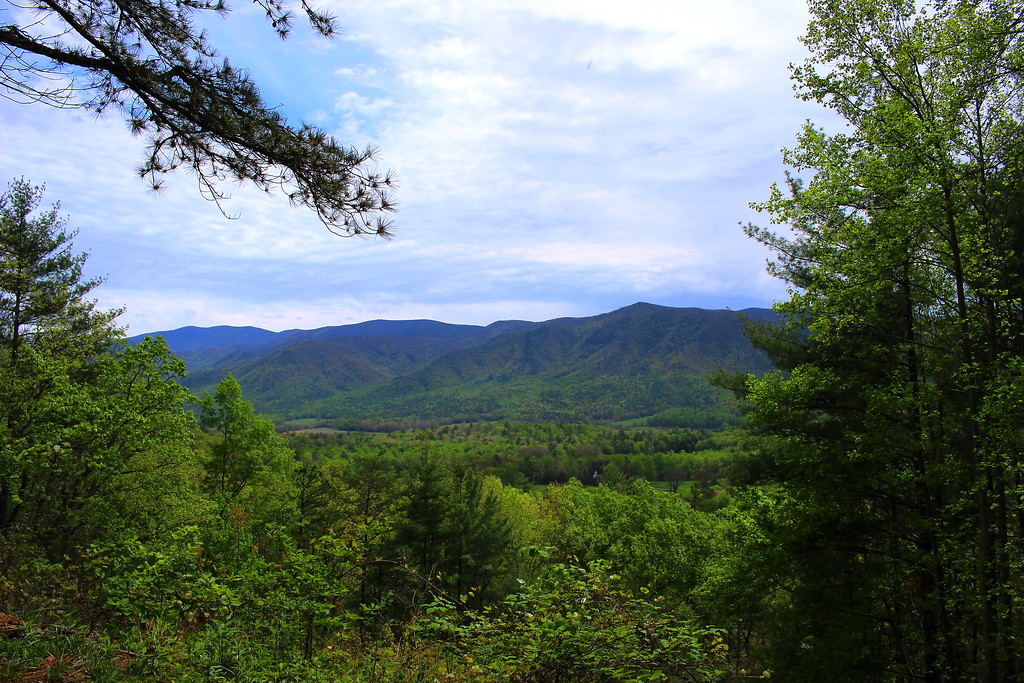 View into the Cove from Rich Mtn Rd