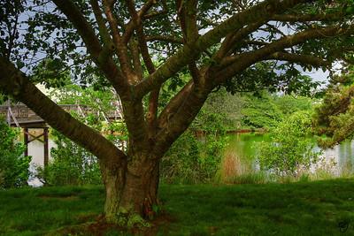 Spring Lake Tree_8990-2 FINAL signed