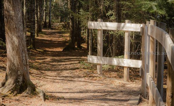 Campground Trails