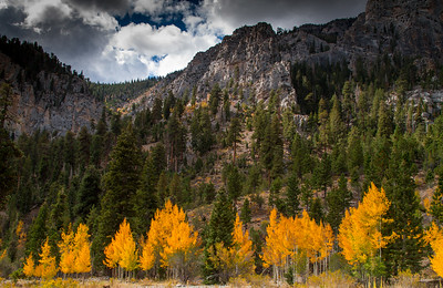 Fall in Kyle Canyon