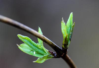 Spring / New Life