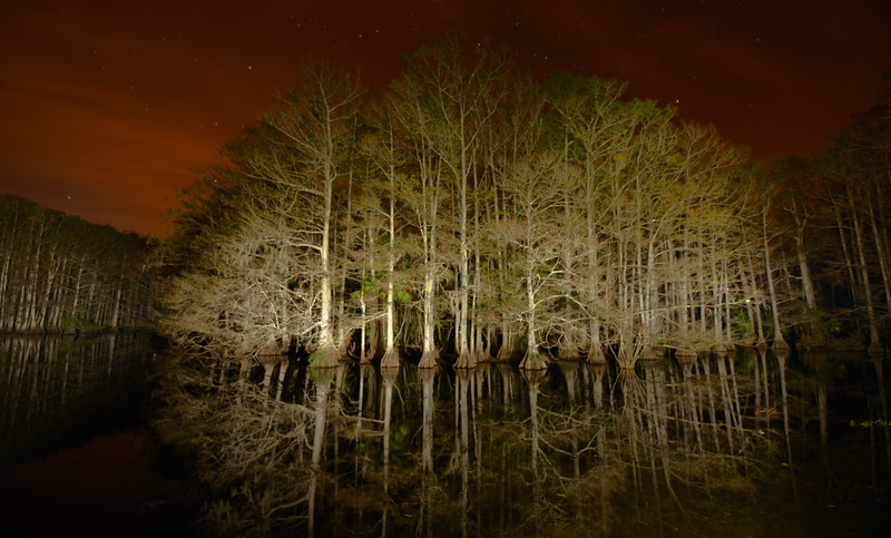 Babcock Ranch Alligator Swamp